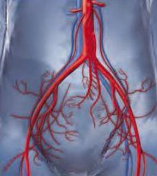 vaginal-varicose-veins